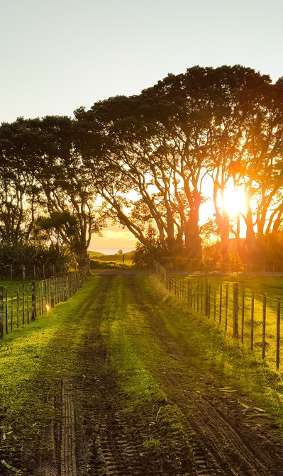 Dirt road leading to farm with sunset backdrop