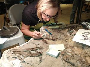 Working on a Champsosaurus at the Burke Museum