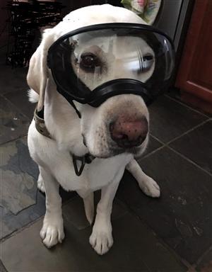 goggle pup